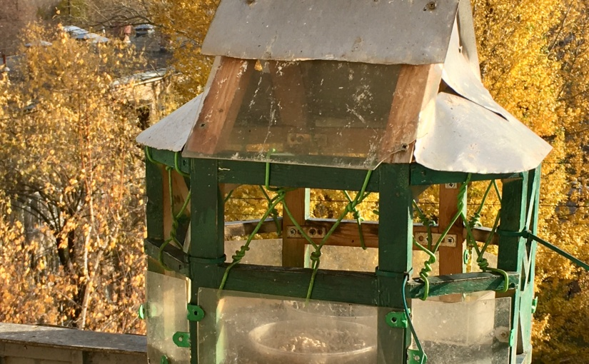 The winter feeder season!